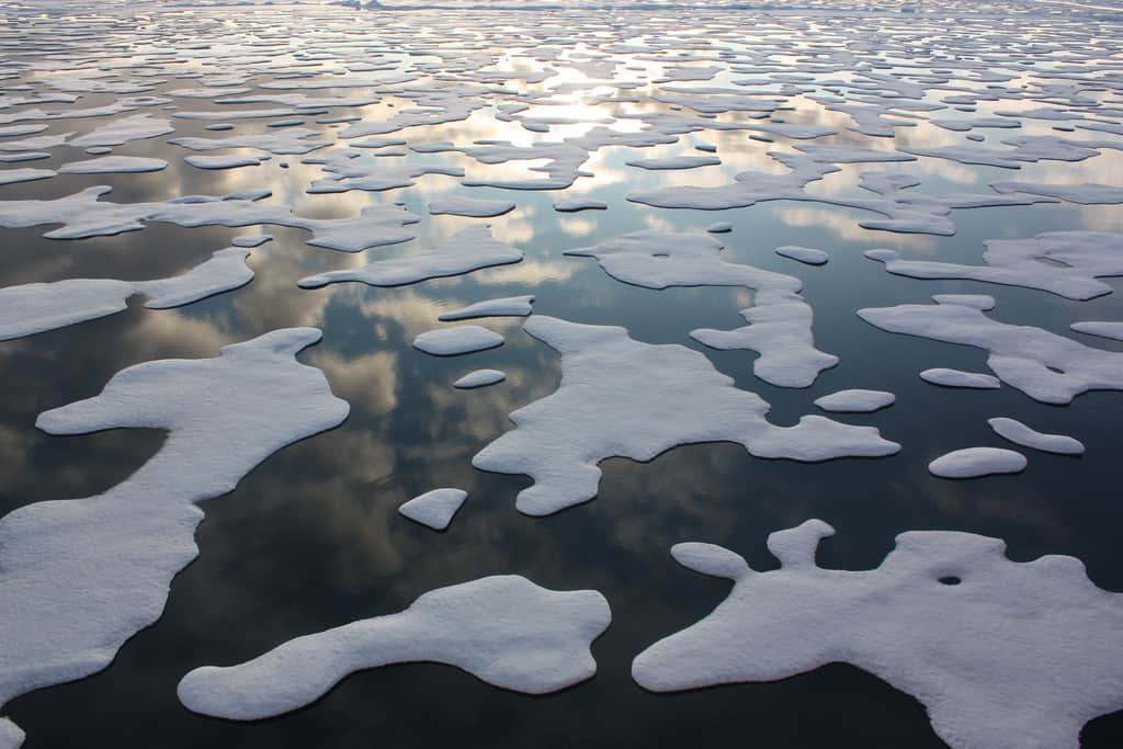 Melting sea ice in the Arctic, during a 2011 research cruise. Credit: NASA Goddard Space Flight Center