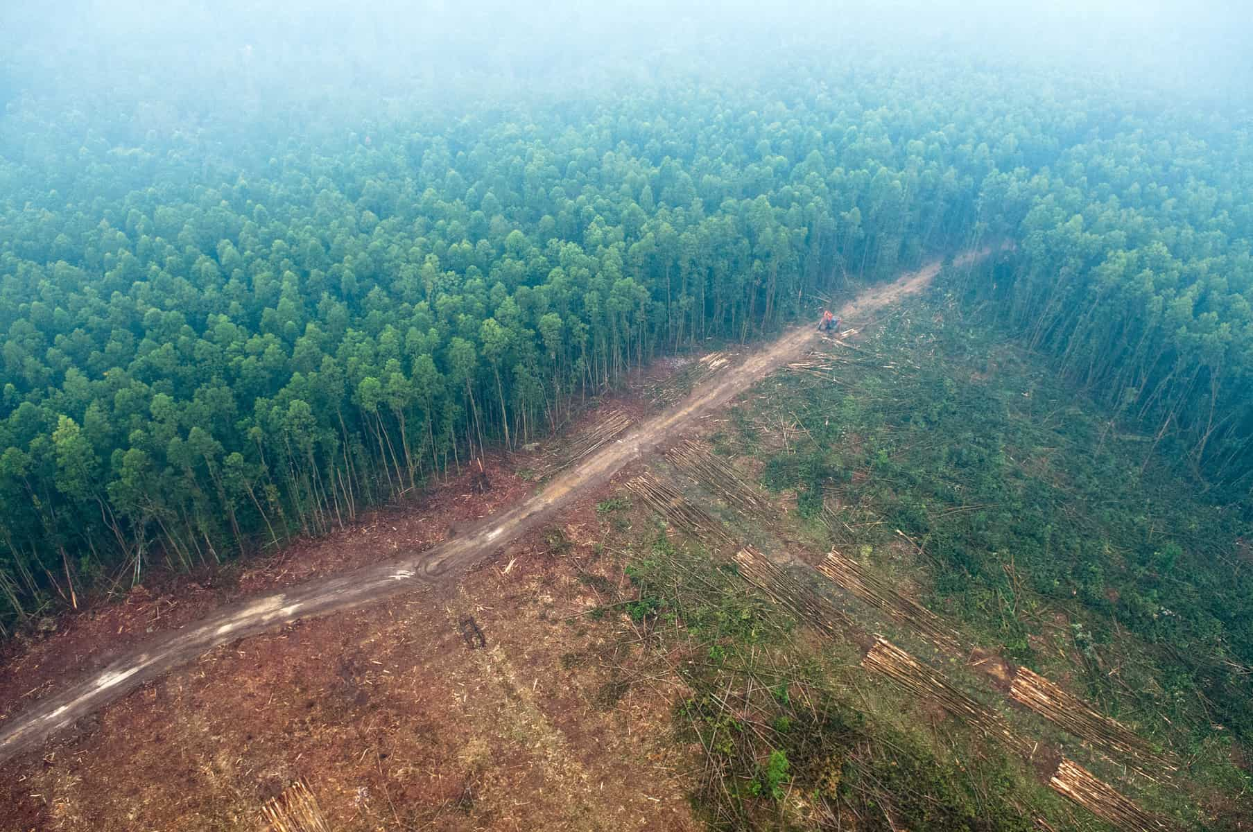 Picture Pile is focusing first on Indonesia and Tanzania - two regions where there are problems with existing maps of deforestation. Photo (cc) Aulia Erlangga for Center for International Forestry Research (CIFOR).