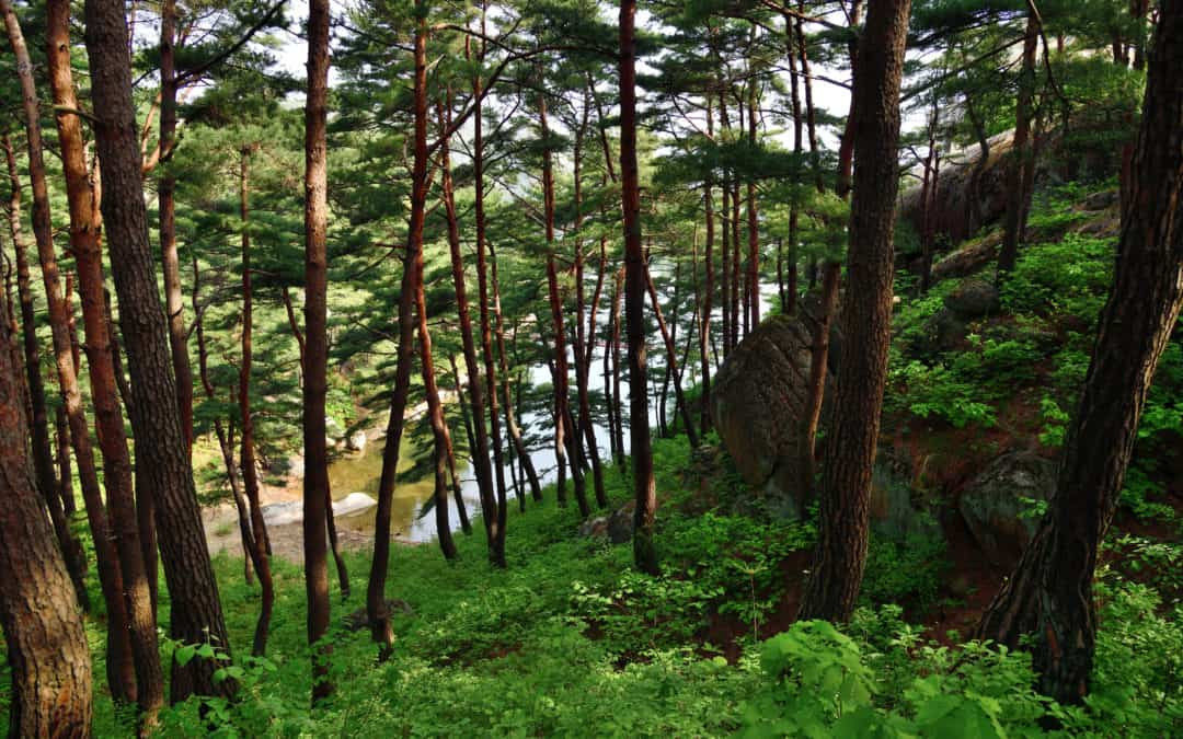 Science across closed borders – the quest for restoring forests in North Korea