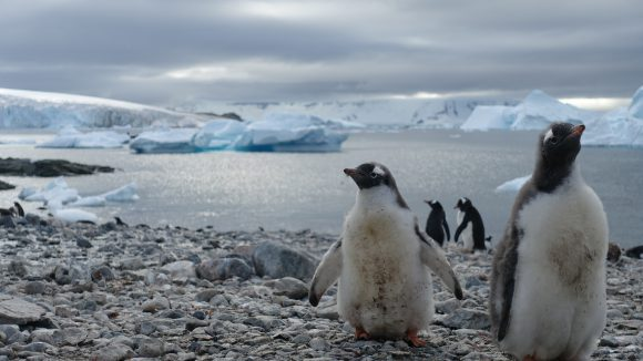 Antarctic penguins © Cecile Godde