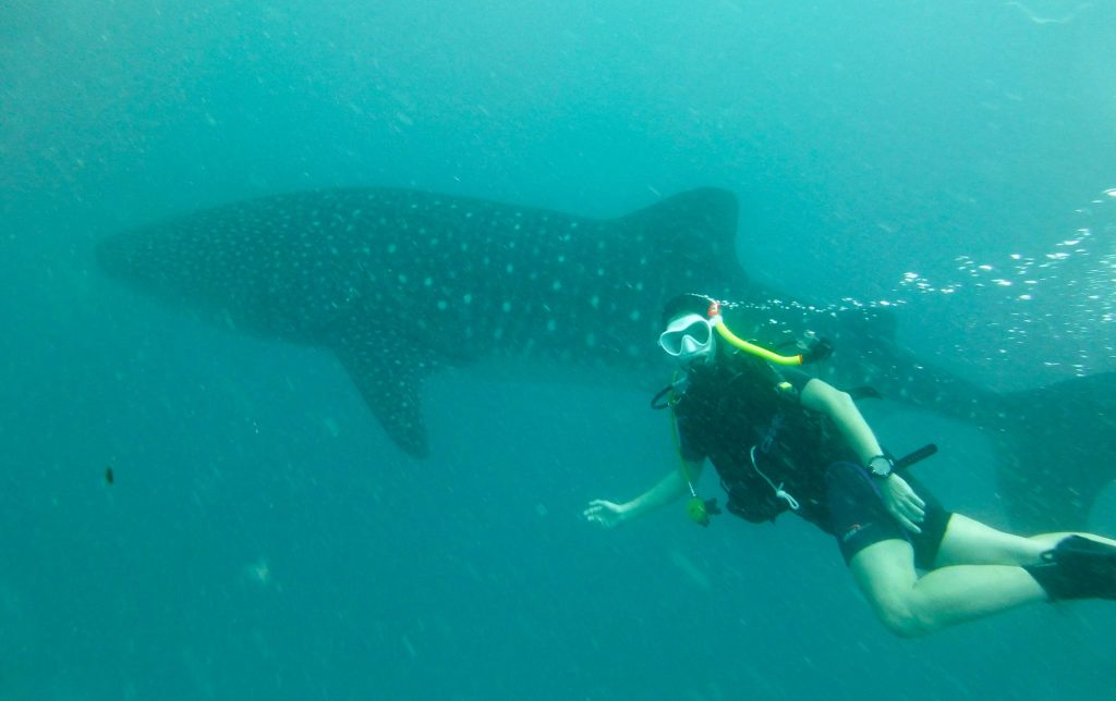 Gosia swimming with a whale shark. ©Eiko Gramlich