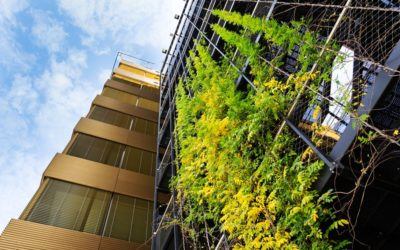 Enhancing urban resilience through nature-based solutions