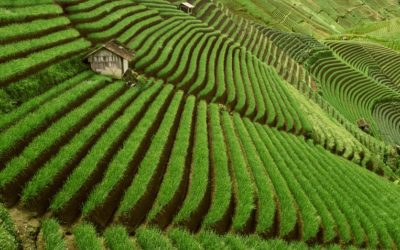Perspectives on transforming food and land use systems for sustainable development