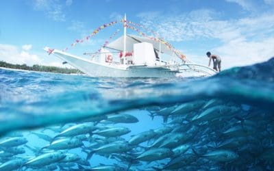 More fish, less energy, less pollution – but only if all players cooperate