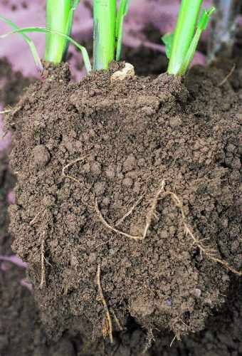 Loamy soil