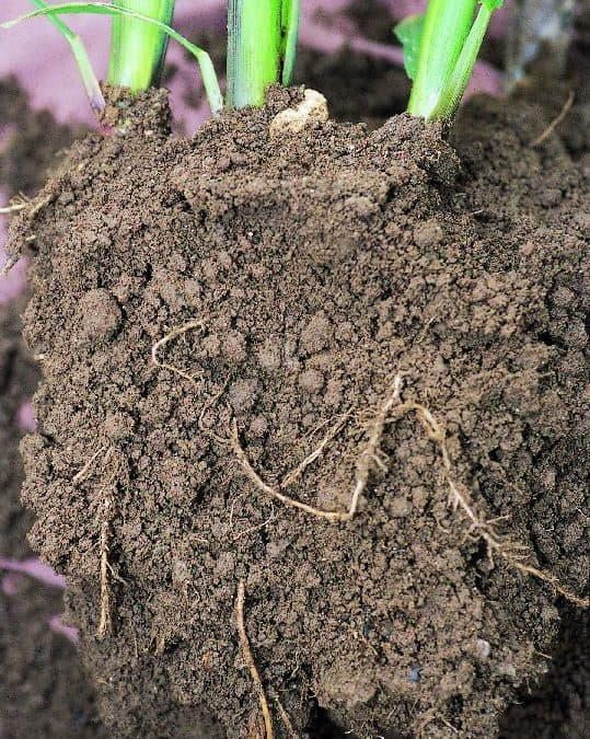 Moisture matters! What's the impact of water thresholds and soil characteristics?